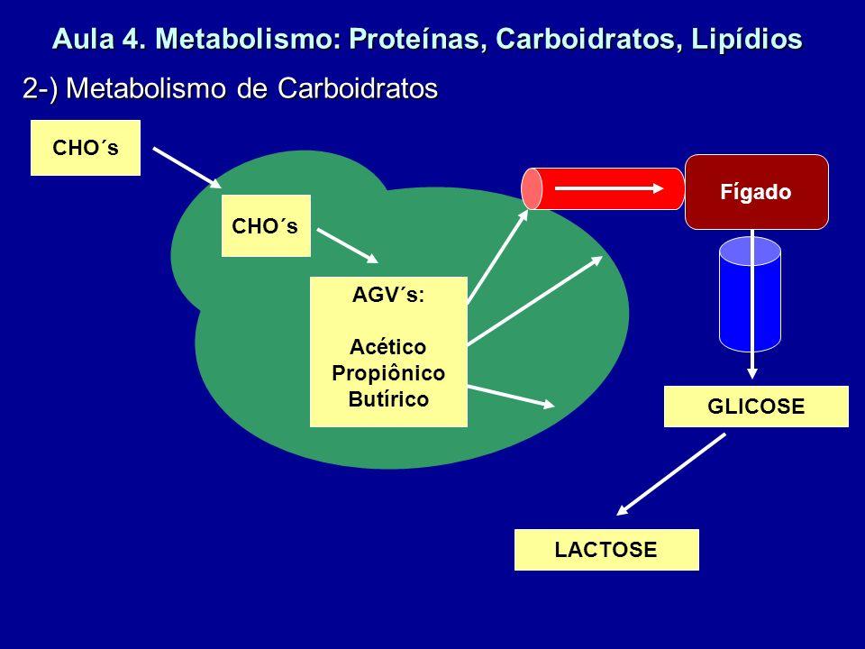 Aula 4. Metabolismo: Proteínas, Carboidratos, Lipídios 2-) Metabolismo de Carboidratos CHO´s AGV´s: Acético Propiônico Butírico Fígado GLICOSE LACTOSE