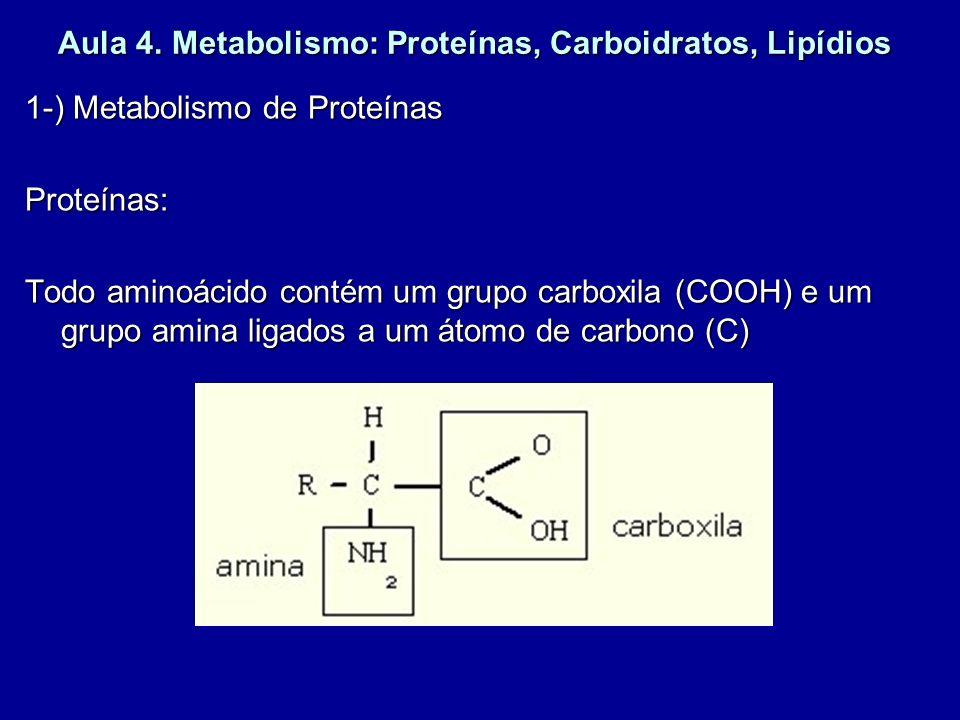 Aula 4. Metabolismo: Proteínas, Carboidratos, Lipídios 1-) Metabolismo de Proteínas Proteínas: Todo aminoácido contém um grupo carboxila (COOH) e um g