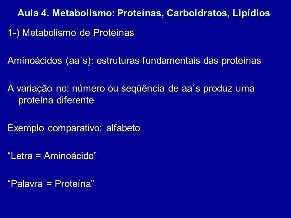 Aula 4. Metabolismo: Proteínas, Carboidratos, Lipídios 1-) Metabolismo de Proteínas Aminoácidos (aa´s): estruturas fundamentais das proteínas A variaç