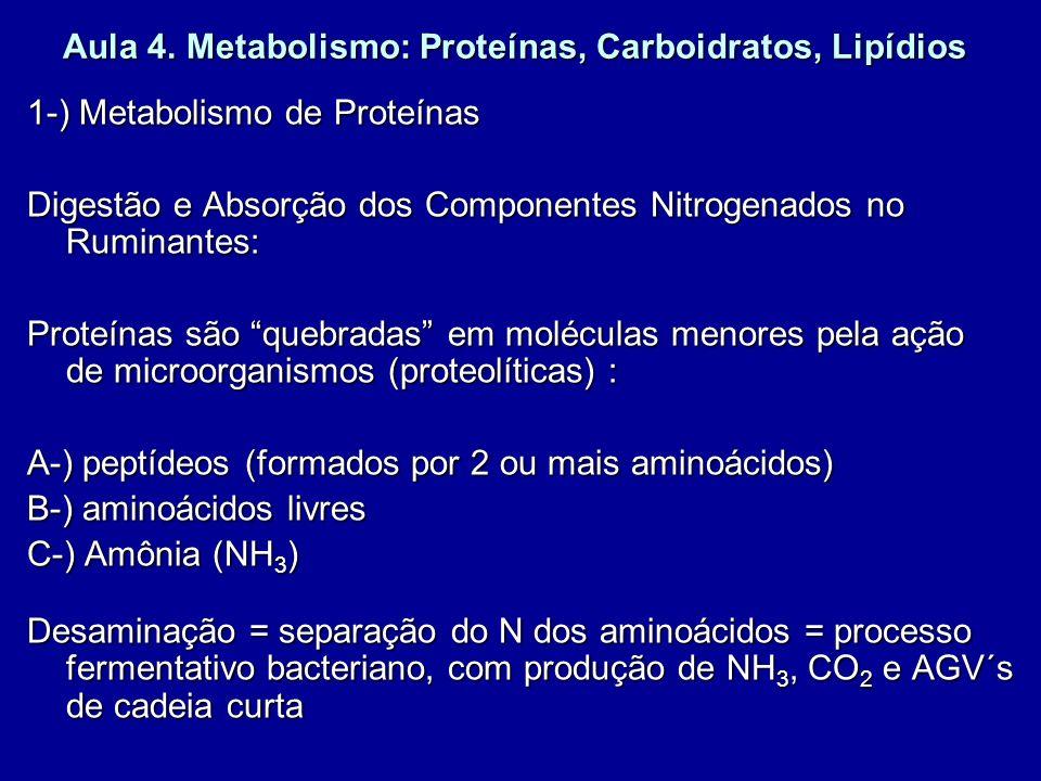 Aula 4. Metabolismo: Proteínas, Carboidratos, Lipídios 1-) Metabolismo de Proteínas Digestão e Absorção dos Componentes Nitrogenados no Ruminantes: Pr