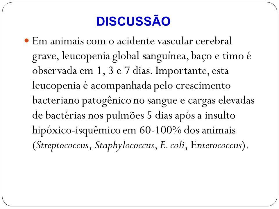 Em animais com o acidente vascular cerebral grave, leucopenia global sanguínea, baço e timo é observada em 1, 3 e 7 dias. Importante, esta leucopenia