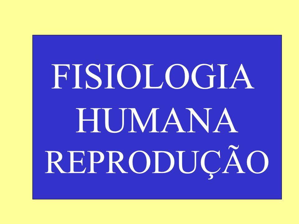 Fisiologia Humana: Sistema Reprodutor Ovulação, fecundação e início do desenvolvimento embrionário Se ocorrer a fecundação, o ovòcito II completará a segunda divisão de meiose e se diferenciará em óvulo; e em seguida, após a fusão dos núcleos do espermatozóide e do óvulo (cariogamia ou fertilização) formar-se-á o zigoto.
