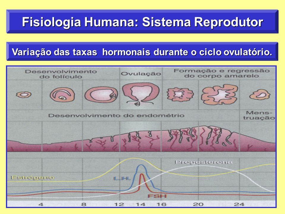 Variação das taxas hormonais durante o ciclo ovulatório. Fisiologia Humana: Sistema Reprodutor