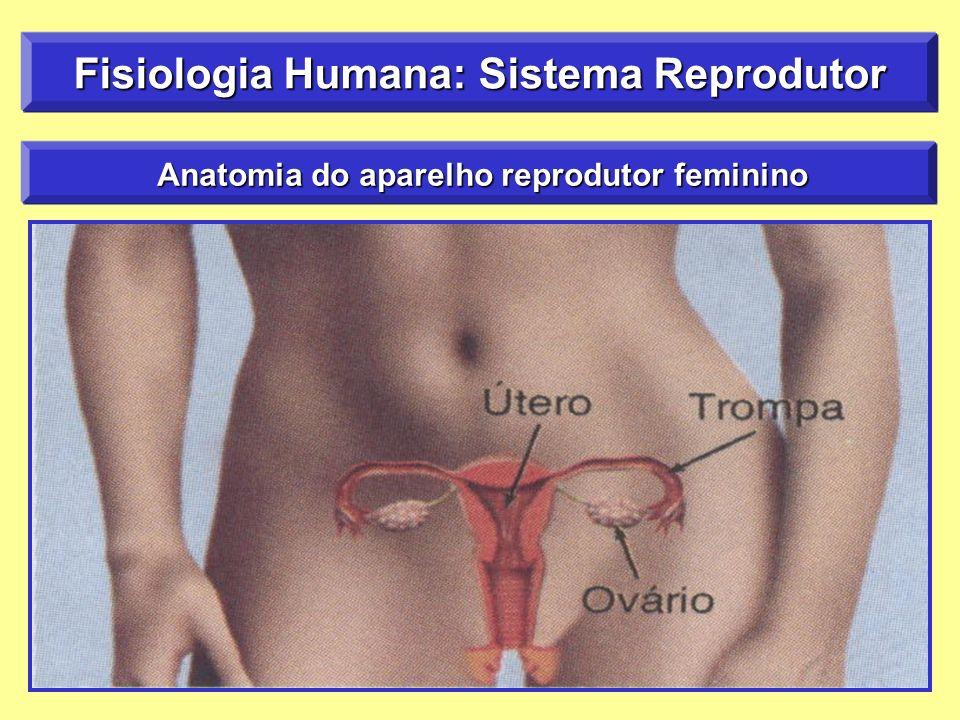 Anatomia do aparelho reprodutor feminino Anatomia do aparelho reprodutor feminino Fisiologia Humana: Sistema Reprodutor