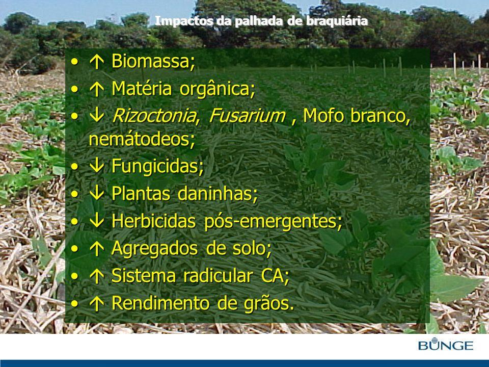 Biomassa; Biomassa; Matéria orgânica; Matéria orgânica; Rizoctonia, Fusarium, Mofo branco, nemátodeos; Rizoctonia, Fusarium, Mofo branco, nemátodeos;
