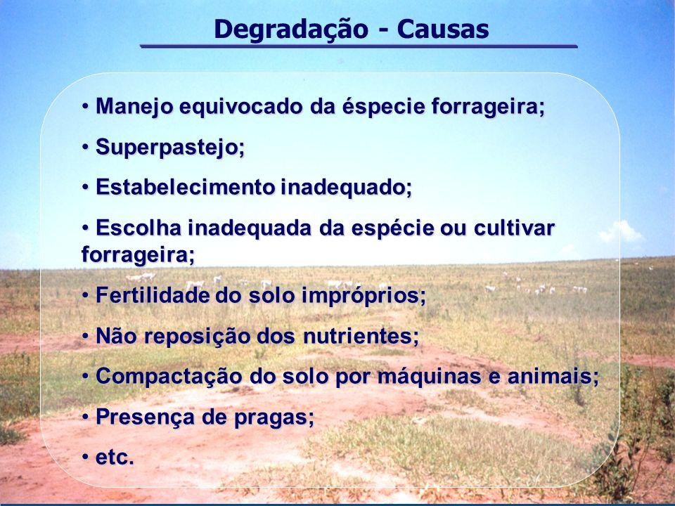 Degradação - Causas Manejo equivocado da éspecie forrageira; Manejo equivocado da éspecie forrageira; Superpastejo; Superpastejo; Estabelecimento inad