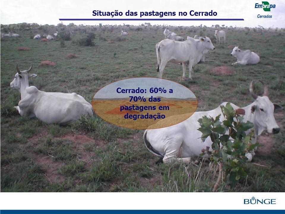 Cerrado: 60% a 70% das pastagens em degradação Situação das pastagens no Cerrado