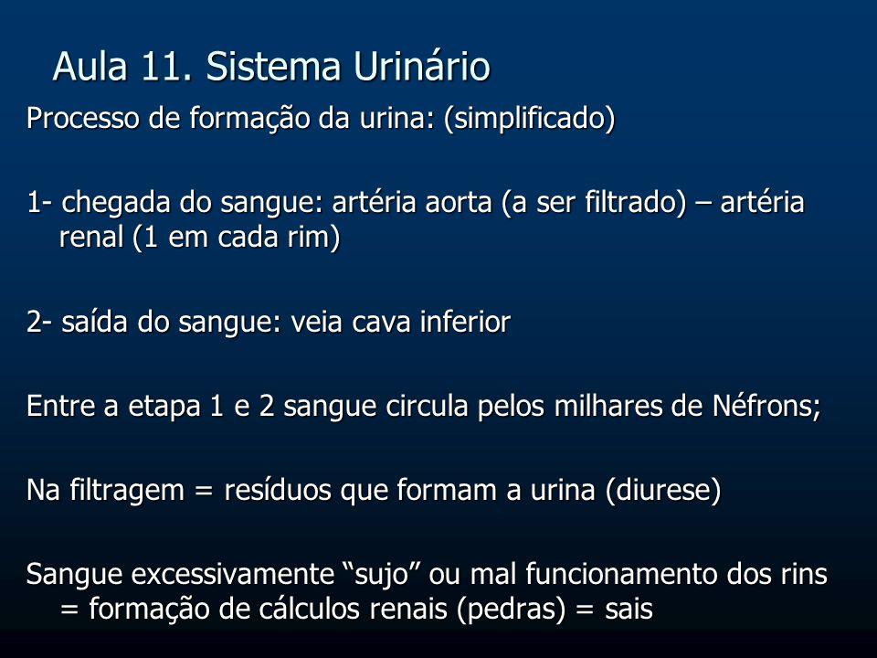 Aula 11. Sistema Urinário Processo de formação da urina: (simplificado) 1- chegada do sangue: artéria aorta (a ser filtrado) – artéria renal (1 em cad