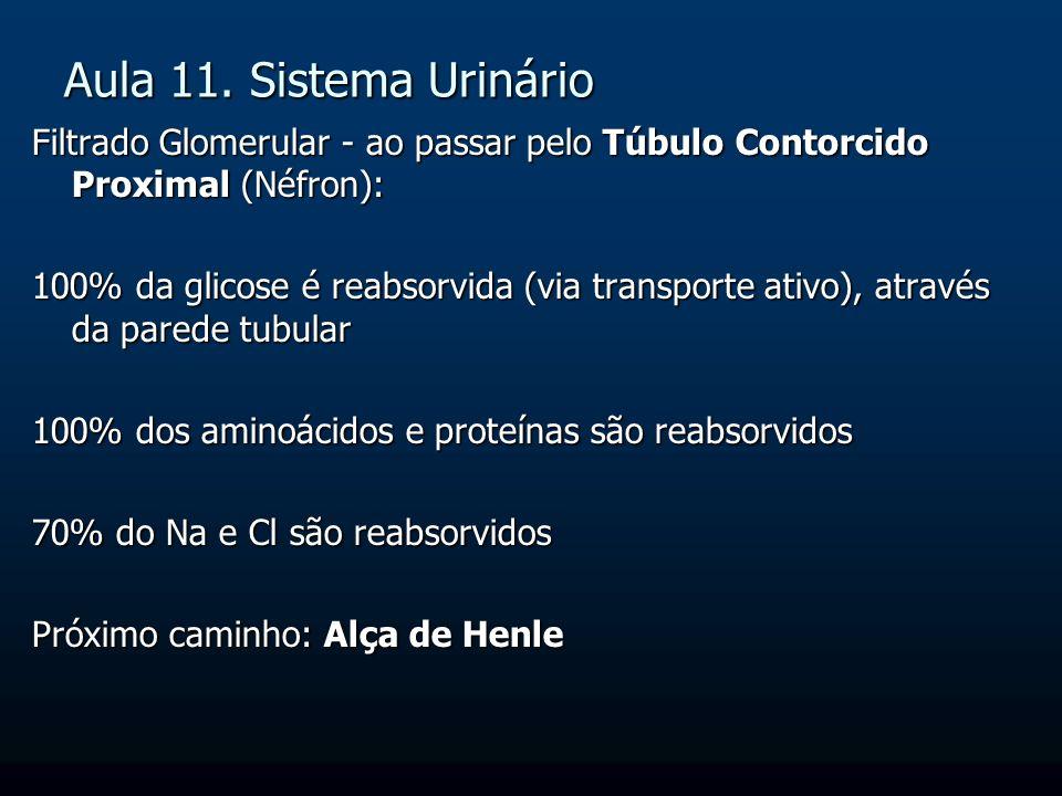 Aula 11. Sistema Urinário Filtrado Glomerular - ao passar pelo Túbulo Contorcido Proximal (Néfron): 100% da glicose é reabsorvida (via transporte ativ