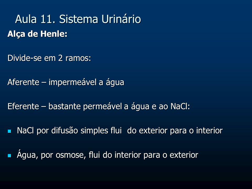 Aula 11. Sistema Urinário Alça de Henle: Divide-se em 2 ramos: Aferente – impermeável a água Eferente – bastante permeável a água e ao NaCl: NaCl por