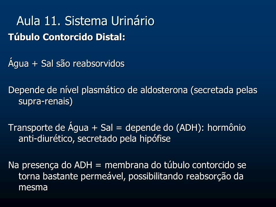 Aula 11. Sistema Urinário Túbulo Contorcido Distal: Água + Sal são reabsorvidos Depende de nível plasmático de aldosterona (secretada pelas supra-rena