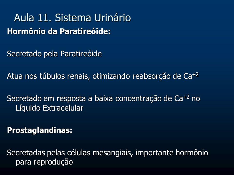 Aula 11. Sistema Urinário Hormônio da Paratireóide: Secretado pela Paratireóide Atua nos túbulos renais, otimizando reabsorção de Ca +2 Secretado em r
