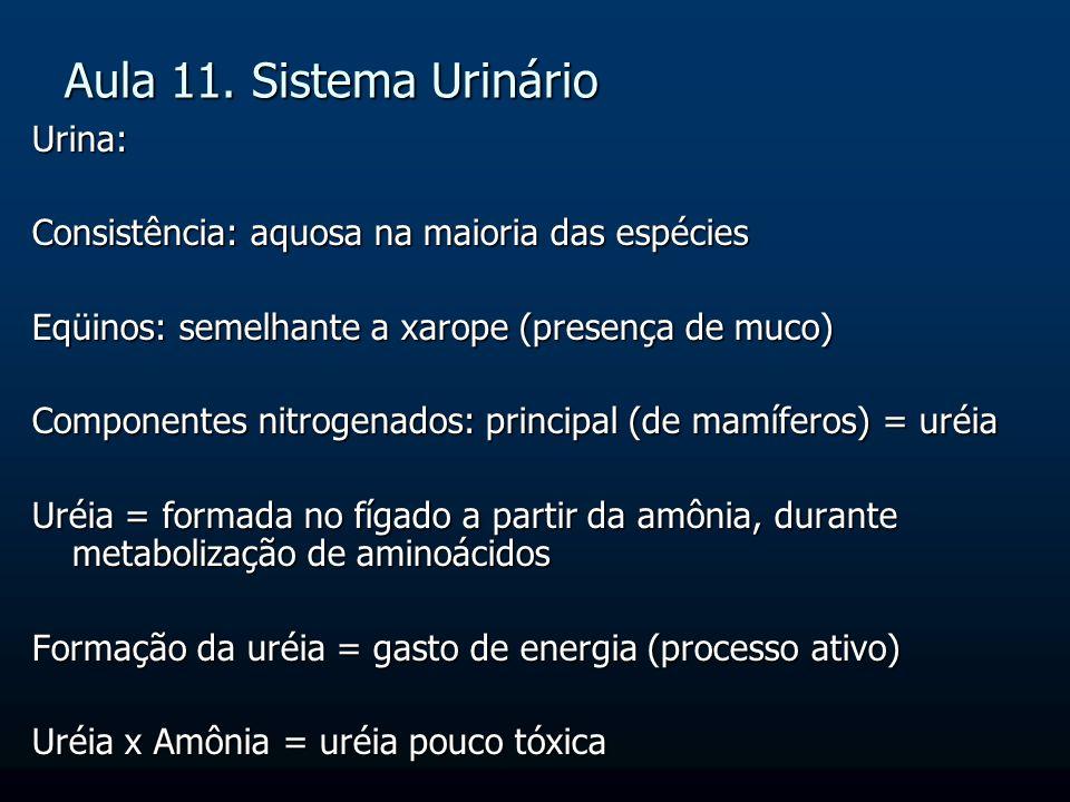 Aula 11. Sistema Urinário Urina: Consistência: aquosa na maioria das espécies Eqüinos: semelhante a xarope (presença de muco) Componentes nitrogenados