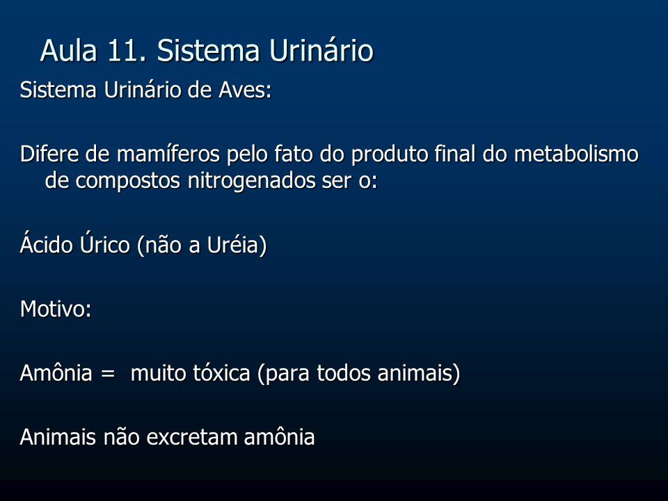 Aula 11. Sistema Urinário Sistema Urinário de Aves: Difere de mamíferos pelo fato do produto final do metabolismo de compostos nitrogenados ser o: Áci
