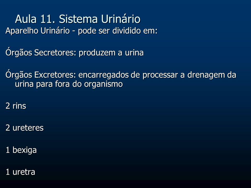 Aula 11. Sistema Urinário Aparelho Urinário - pode ser dividido em: Órgãos Secretores: produzem a urina Órgãos Excretores: encarregados de processar a