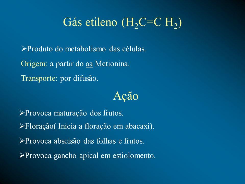 Gás etileno (H 2 C=C H 2 ) Produto do metabolismo das células. Origem: a partir do aa Metionina. Transporte: por difusão. Ação Provoca maturação dos f