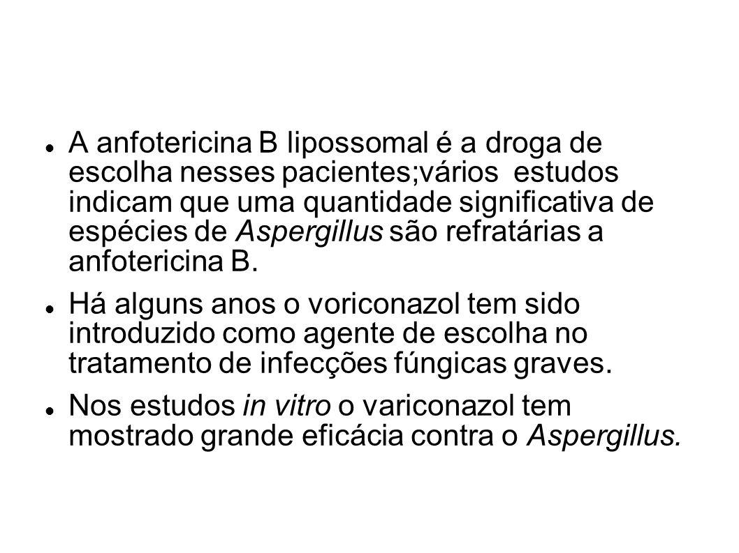 A anfotericina B lipossomal é a droga de escolha nesses pacientes;vários estudos indicam que uma quantidade significativa de espécies de Aspergillus s
