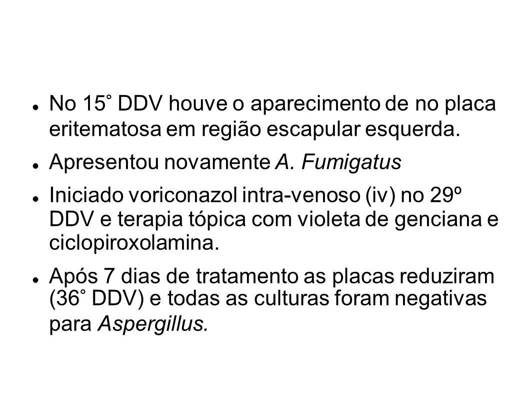 No 15° DDV houve o aparecimento de no placa eritematosa em região escapular esquerda. Apresentou novamente A. Fumigatus Iniciado voriconazol intra-ven