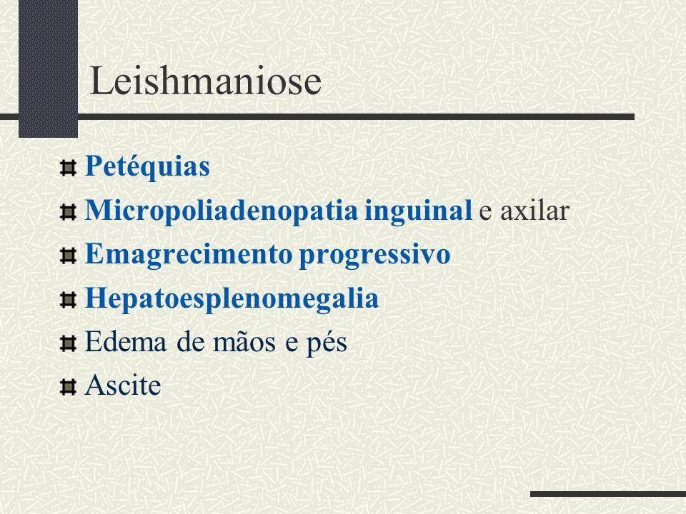 Leishmaniose Petéquias Micropoliadenopatia inguinal e axilar Emagrecimento progressivo Hepatoesplenomegalia Edema de mãos e pés Ascite