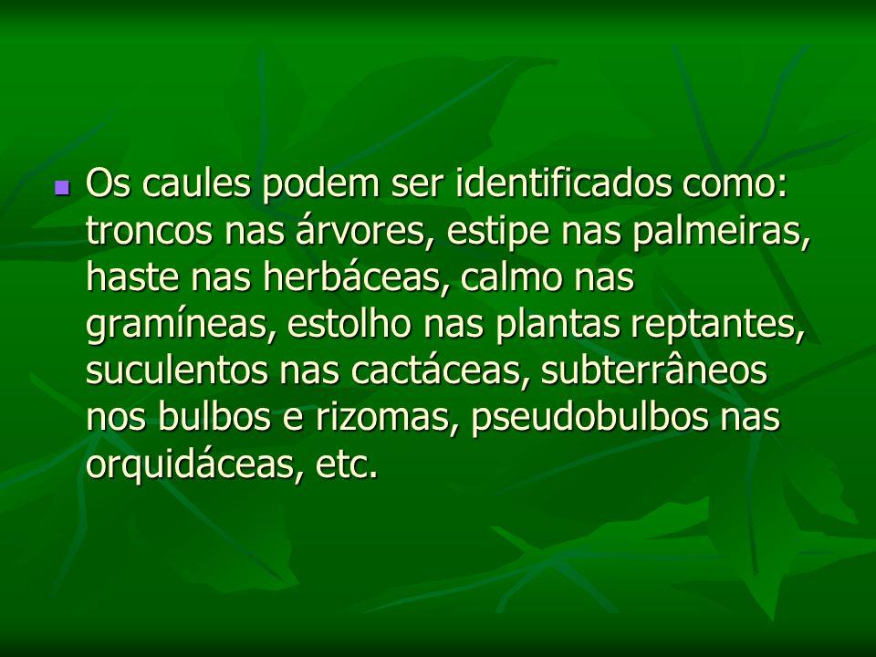 Os caules podem ser identificados como: troncos nas árvores, estipe nas palmeiras, haste nas herbáceas, calmo nas gramíneas, estolho nas plantas reptantes, suculentos nas cactáceas, subterrâneos nos bulbos e rizomas, pseudobulbos nas orquidáceas, etc.
