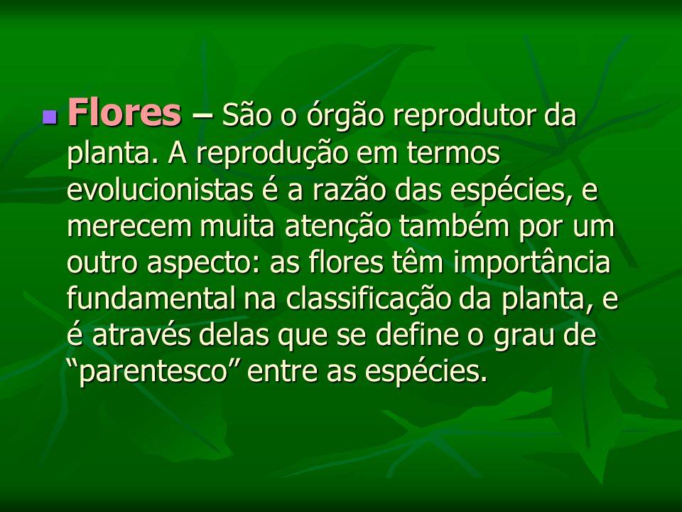 Flores – São o órgão reprodutor da planta.