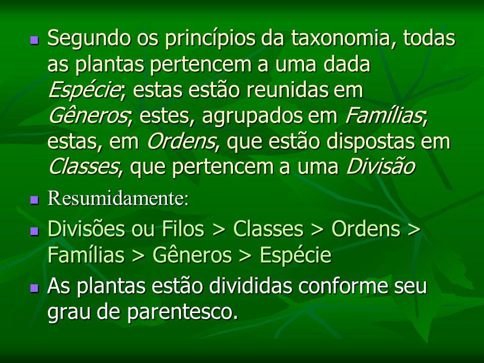Segundo os princípios da taxonomia, todas as plantas pertencem a uma dada Espécie; estas estão reunidas em Gêneros; estes, agrupados em Famílias; estas, em Ordens, que estão dispostas em Classes, que pertencem a uma Divisão Segundo os princípios da taxonomia, todas as plantas pertencem a uma dada Espécie; estas estão reunidas em Gêneros; estes, agrupados em Famílias; estas, em Ordens, que estão dispostas em Classes, que pertencem a uma Divisão Resumidamente: Resumidamente: Divisões ou Filos > Classes > Ordens > Famílias > Gêneros > Espécie Divisões ou Filos > Classes > Ordens > Famílias > Gêneros > Espécie As plantas estão divididas conforme seu grau de parentesco.