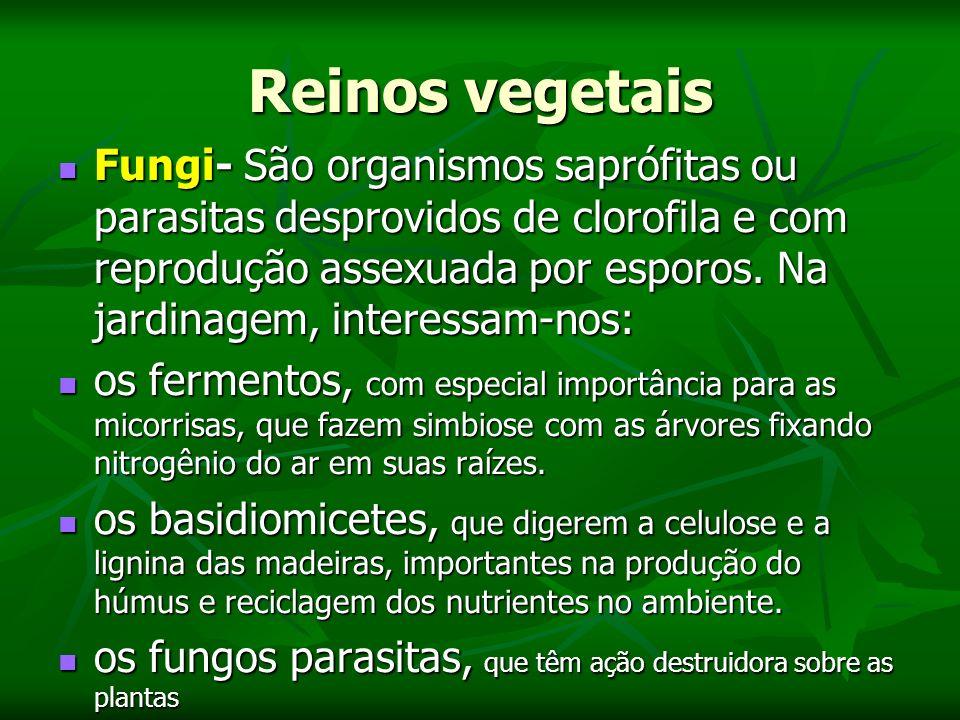 Reinos vegetais Fungi- São organismos saprófitas ou parasitas desprovidos de clorofila e com reprodução assexuada por esporos.