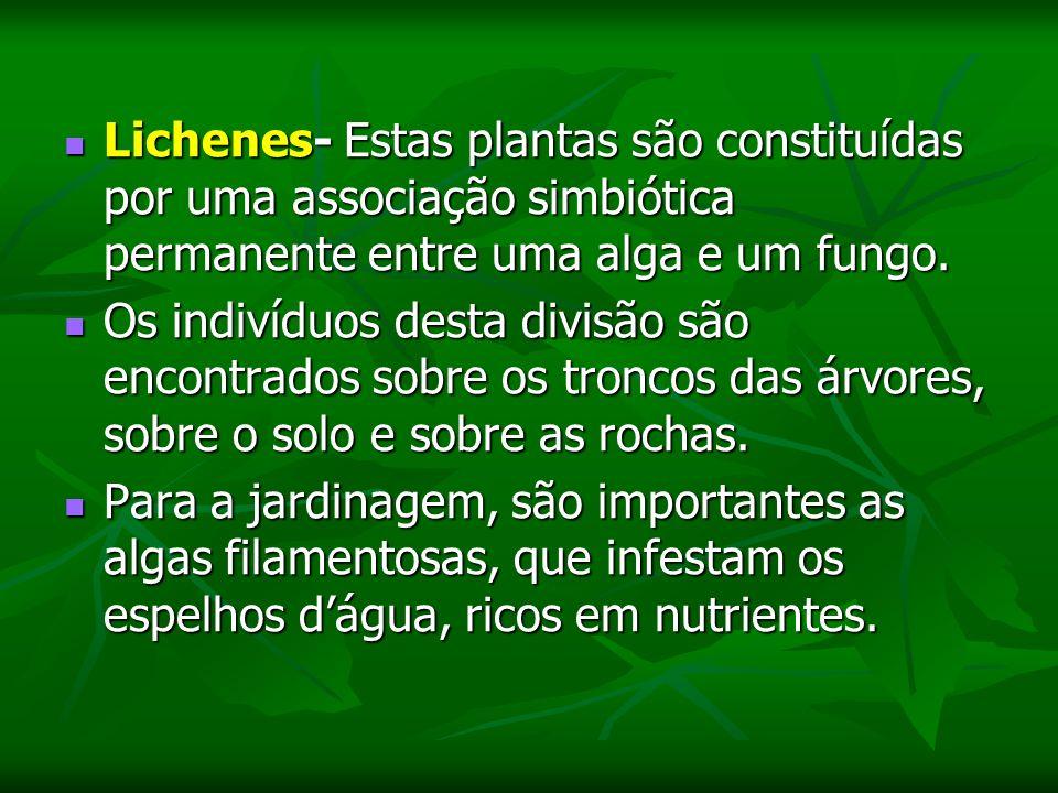Lichenes- Estas plantas são constituídas por uma associação simbiótica permanente entre uma alga e um fungo.