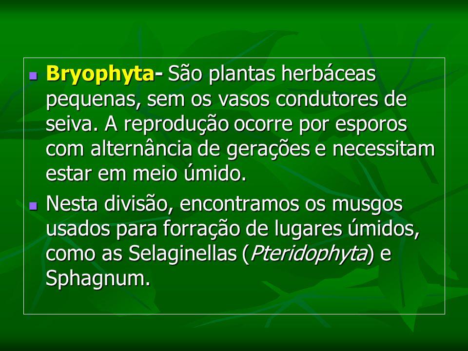 Bryophyta- São plantas herbáceas pequenas, sem os vasos condutores de seiva.