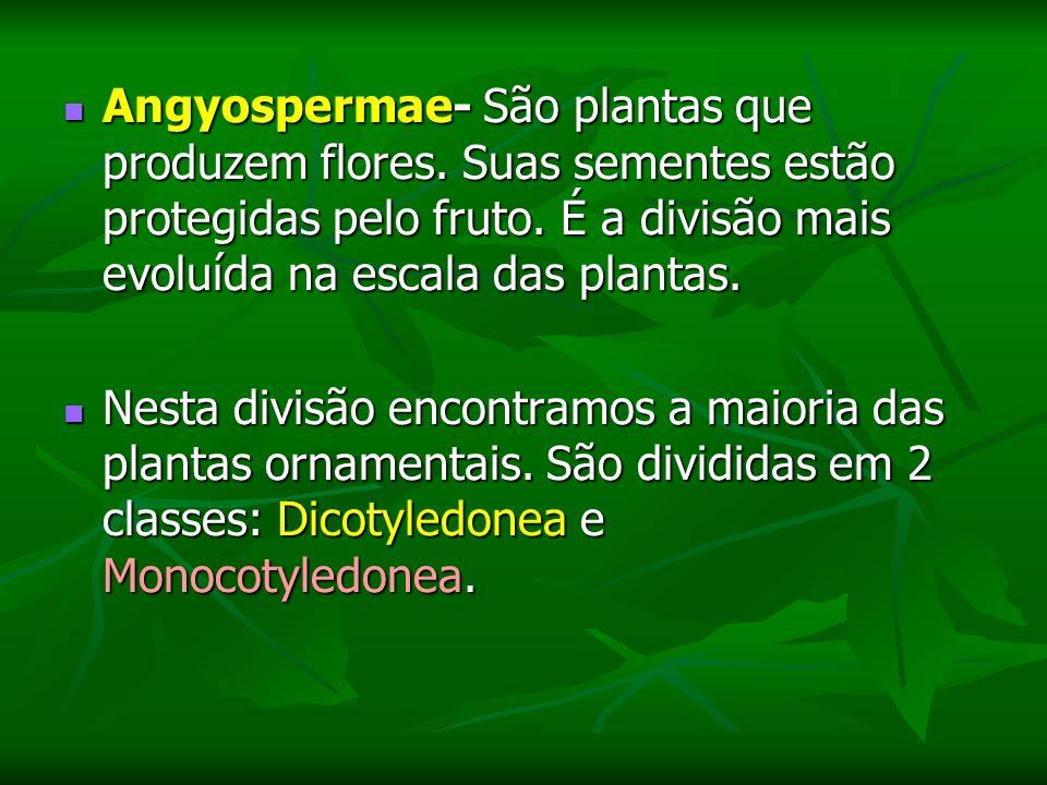 Angyospermae- São plantas que produzem flores.Suas sementes estão protegidas pelo fruto.