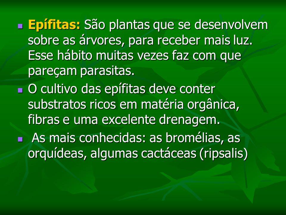 Epífitas: São plantas que se desenvolvem sobre as árvores, para receber mais luz.