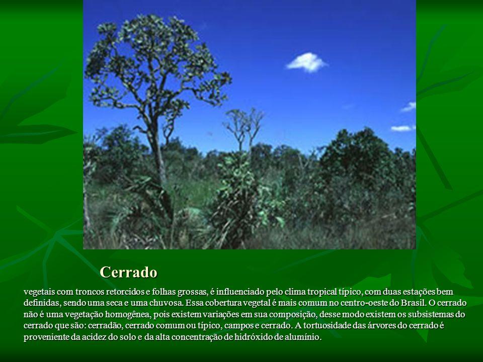 Cerrado vegetais com troncos retorcidos e folhas grossas, é influenciado pelo clima tropical típico, com duas estações bem definidas, sendo uma seca e uma chuvosa.