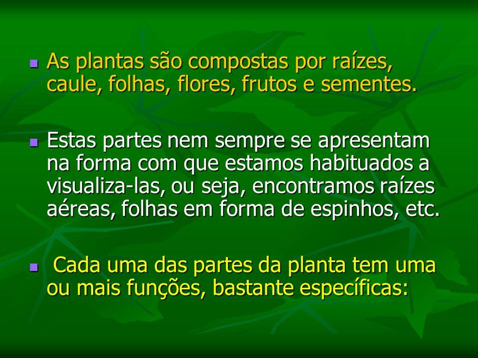 Palmeiras: Também divididas em pequeno, médio e grande porte, variam de 0.50 m a 50 m.