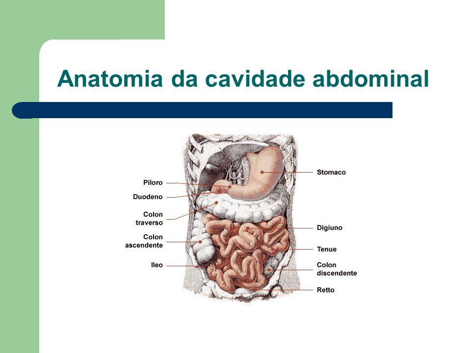 Má rotação intestinal Aspectos Gerais Alterações da rotação e da fixação do intestino, durante o período embrionário.