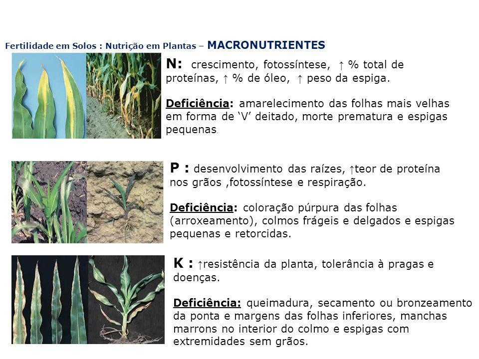 N: crescimento, fotossíntese, % total de proteínas, % de óleo, peso da espiga. Deficiência: amarelecimento das folhas mais velhas em forma de V deitad