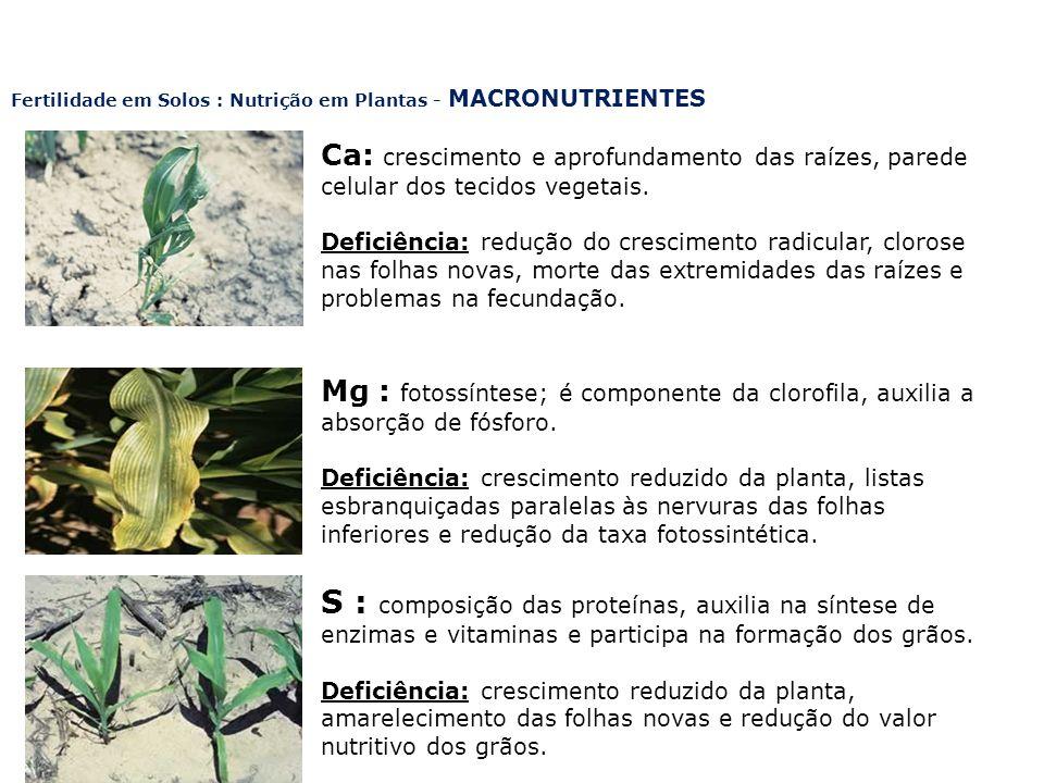 Fertilidade em Solos : Nutrição em Plantas - MACRONUTRIENTES Ca: crescimento e aprofundamento das raízes, parede celular dos tecidos vegetais. Deficiê