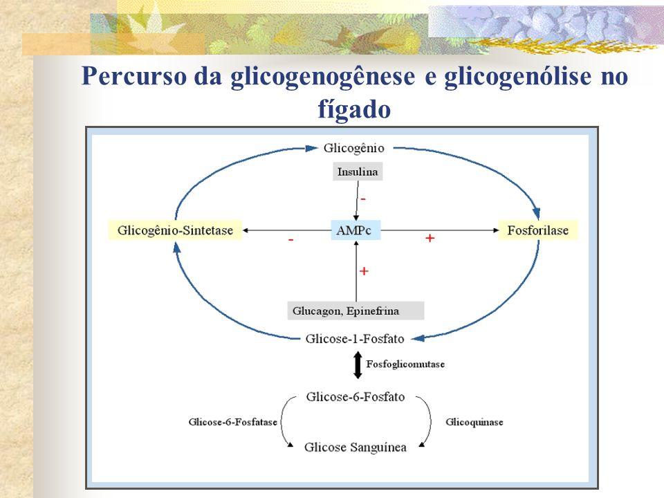 Percurso da glicogenogênese e glicogenólise no fígado