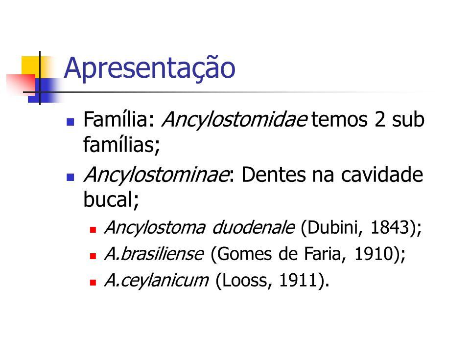 Apresentação Família: Ancylostomidae temos 2 sub famílias; Ancylostominae: Dentes na cavidade bucal; Ancylostoma duodenale (Dubini, 1843); A.brasilien