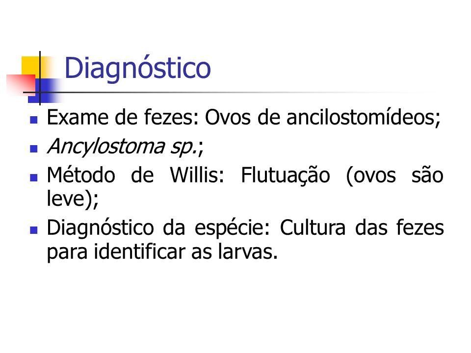 Diagnóstico Exame de fezes: Ovos de ancilostomídeos; Ancylostoma sp.; Método de Willis: Flutuação (ovos são leve); Diagnóstico da espécie: Cultura das
