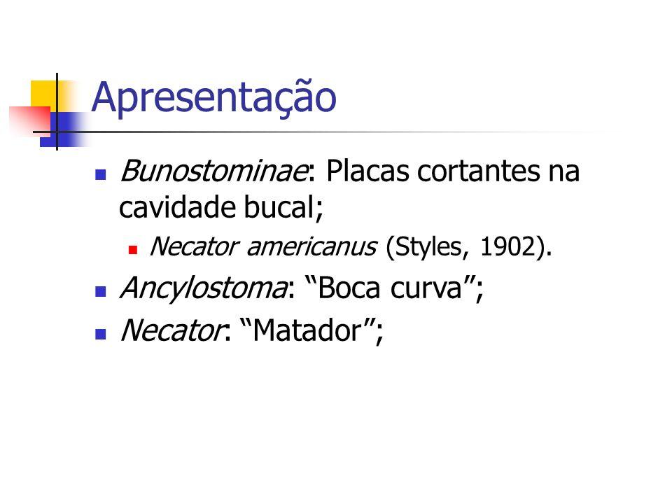 Apresentação Bunostominae: Placas cortantes na cavidade bucal; Necator americanus (Styles, 1902). Ancylostoma: Boca curva; Necator: Matador;