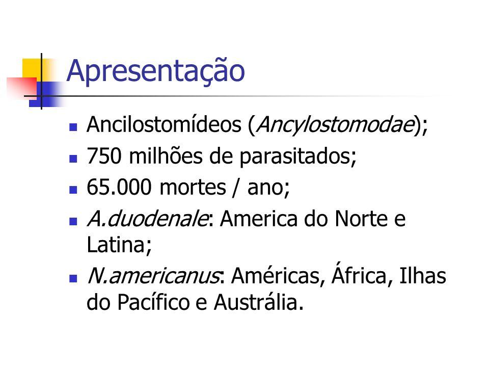 Apresentação Ancilostomídeos (Ancylostomodae); 750 milhões de parasitados; 65.000 mortes / ano; A.duodenale: America do Norte e Latina; N.americanus: