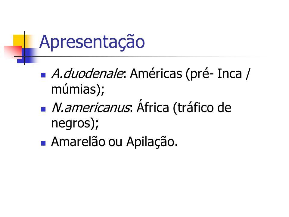 Apresentação A.duodenale: Américas (pré- Inca / múmias); N.americanus: África (tráfico de negros); Amarelão ou Apilação.