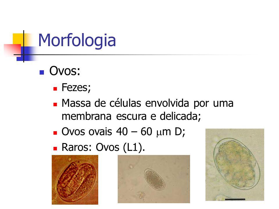 Morfologia Ovos: Fezes; Massa de células envolvida por uma membrana escura e delicada; Ovos ovais 40 – 60 m D; Raros: Ovos (L1).