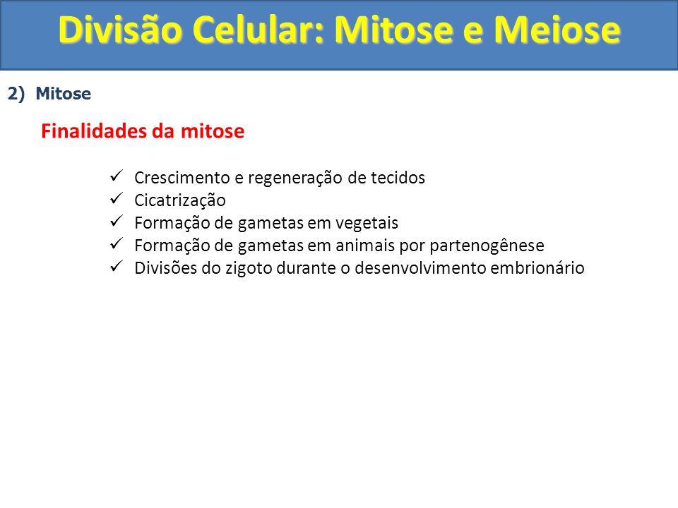 2) Mitose Finalidades da mitose Crescimento e regeneração de tecidos Cicatrização Formação de gametas em vegetais Formação de gametas em animais por partenogênese Divisões do zigoto durante o desenvolvimento embrionário Divisão Celular: Mitose e Meiose