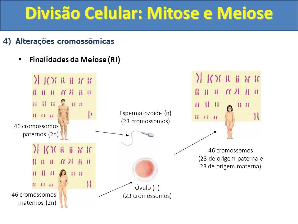 4) Alterações cromossômicas Finalidades da Meiose (R!) 46 cromossomos paternos (2n) 46 cromossomos maternos (2n) Espermatozóide (n) (23 cromossomos) Óvulo (n) (23 cromossomos) 46 cromossomos (23 de origem paterna e 23 de origem materna) Divisão Celular: Mitose e Meiose