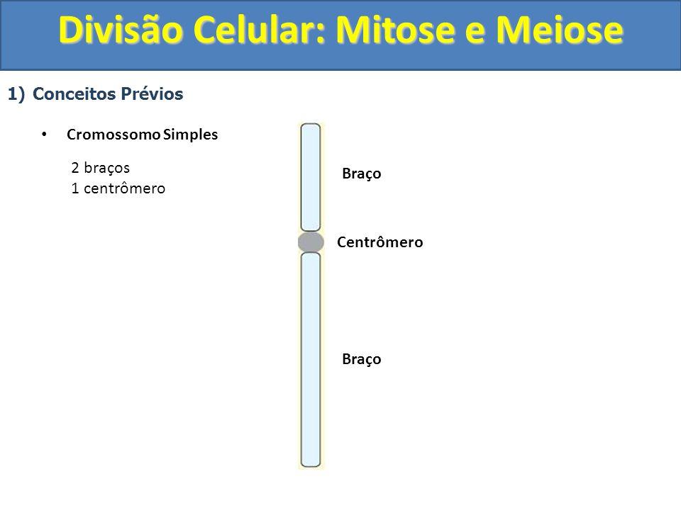 1)Conceitos Prévios Cromossomo Simples Centrômero Braço 2 braços 1 centrômero Divisão Celular: Mitose e Meiose