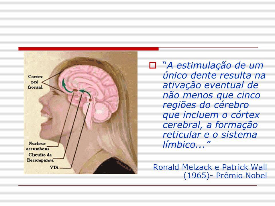 A estimulação de um único dente resulta na ativação eventual de não menos que cinco regiões do cérebro que incluem o córtex cerebral, a formação retic