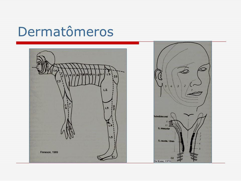 Córtex somatosensitivo Córtex motor