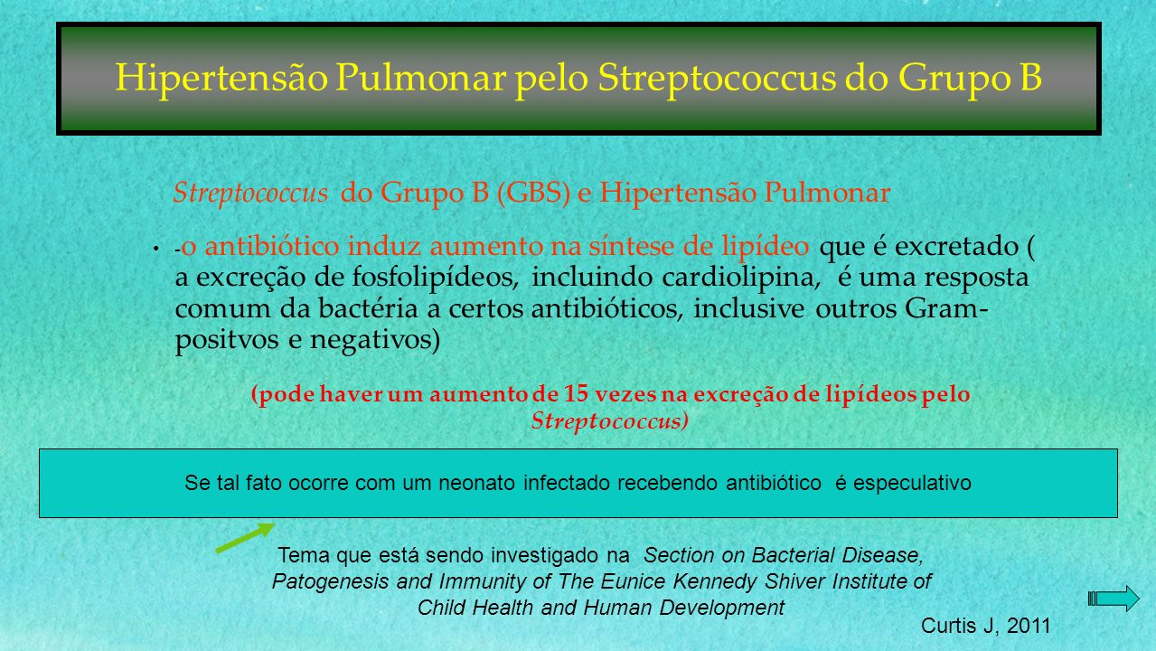 Streptococcus do Grupo B (GBS) e Hipertensão Pulmonar - o antibiótico induz aumento na síntese de lipídeo que é excretado ( a excreção de fosfolipídeos, incluindo cardiolipina, é uma resposta comum da bactéria a certos antibióticos, inclusive outros Gram- positvos e negativos) (pode haver um aumento de 15 vezes na excreção de lipídeos pelo Streptococcus) Se tal fato ocorre com um neonato infectado recebendo antibiótico é especulativo Tema que está sendo investigado na Section on Bacterial Disease, Patogenesis and Immunity of The Eunice Kennedy Shiver Institute of Child Health and Human Development Curtis J, 2011 Hipertensão Pulmonar pelo Streptococcus do Grupo B