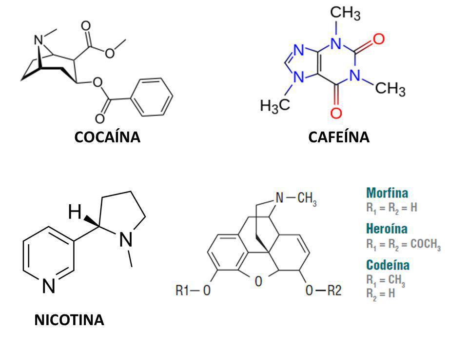 COCAÍNA CAFEÍNA NICOTINA